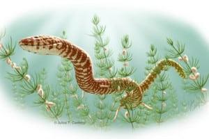 Fosile de șarpe