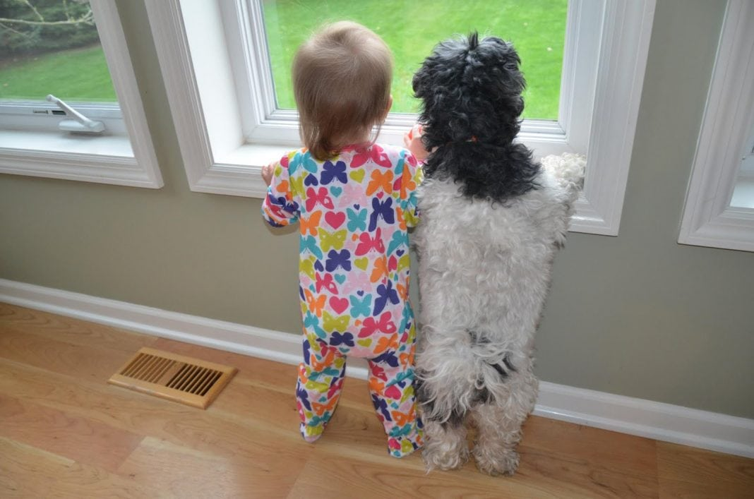 funny pictures of kids and animals 017 jurnal spiritual