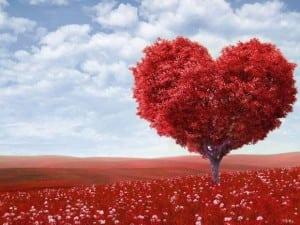 o-inima-de-dragoste-mai-speciala_0083c247fffe50