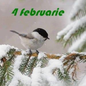 4 februarie
