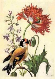 maria-sibylla-merian-pasari-plante
