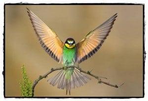 zborul pasarilor