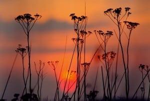 plante noaptea