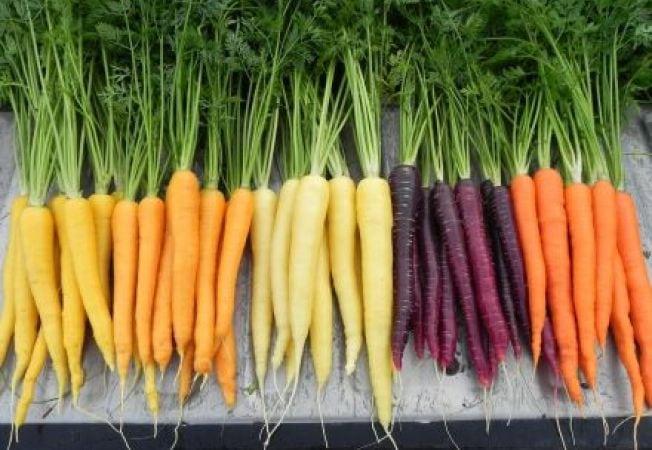 652x450_110512-4-lucruri-interesante-despre-morcovi