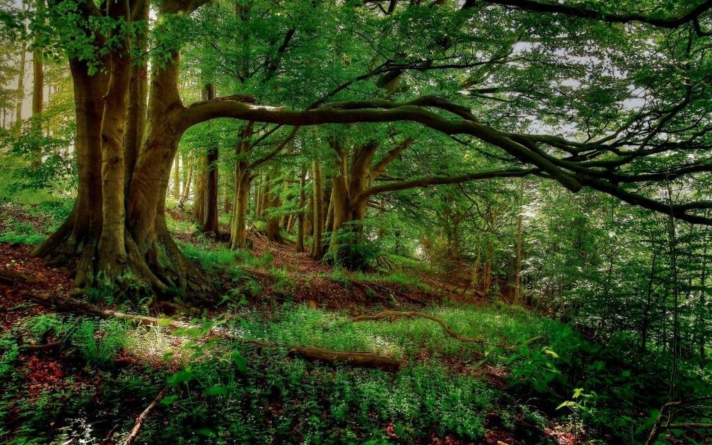 Ziua internațională a pădurilor