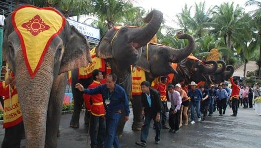 elephant_day_02_54653200