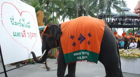 elephant_day_06_28845600