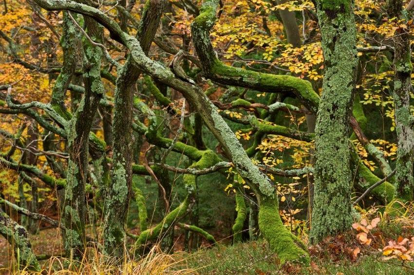 Urwälder in Ãsterreich