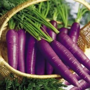 purple-carrot