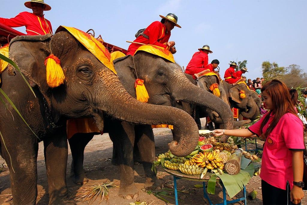 tailanda-elefant-1
