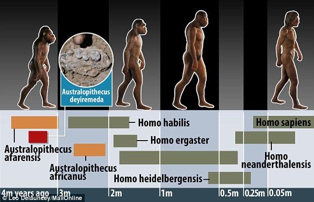 Nouă specie de hominid
