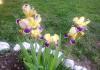 primăvara vieții