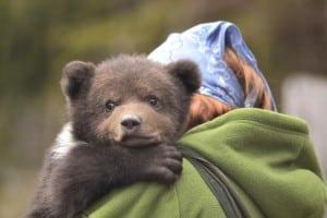 pui-de-urs-salvat-Brașov