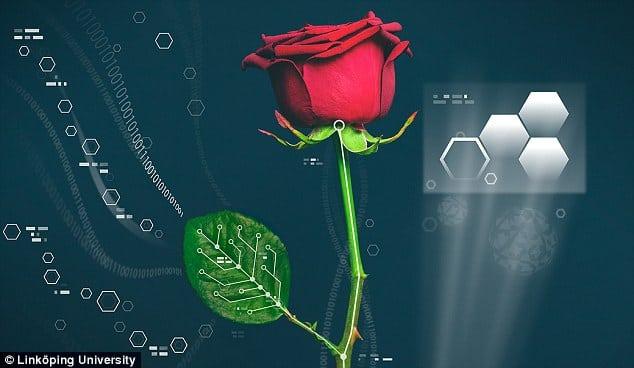 trandafir electronic