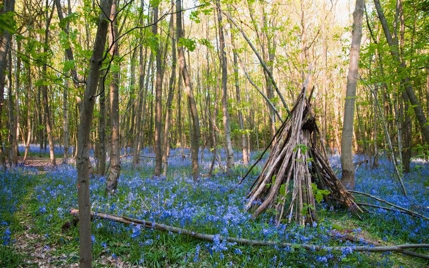 Pădurea Whippendell