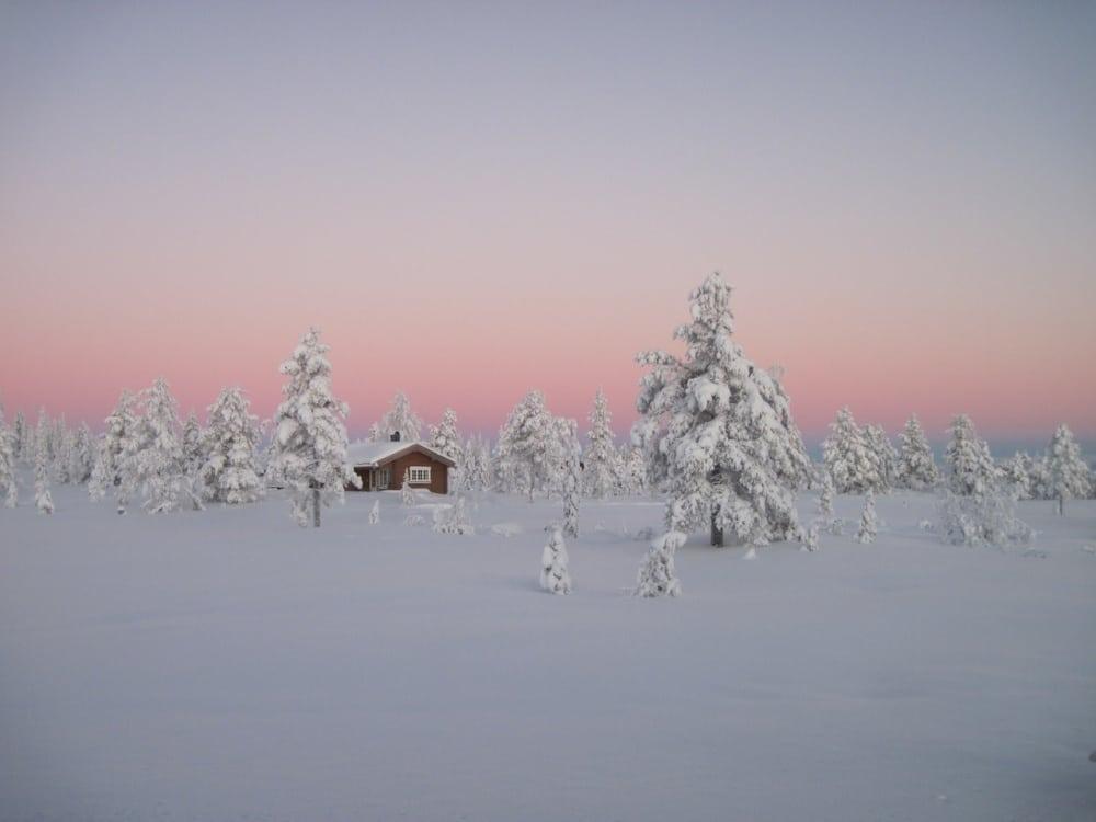 Boreal rainforest, Norway