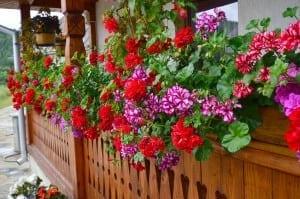 balcon-cu-muscate
