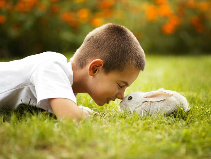 Easter-animals-are-not-good-pets