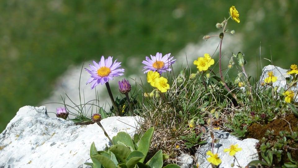 flowers-50491_960_720