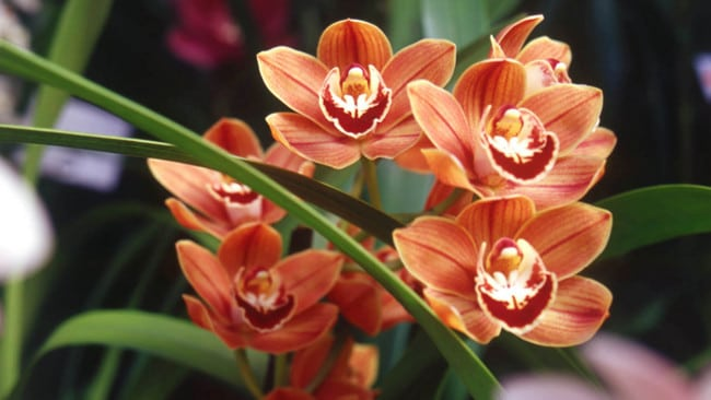 Beautiful-Orchids-Flowers