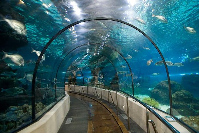 aquarium-barcelona
