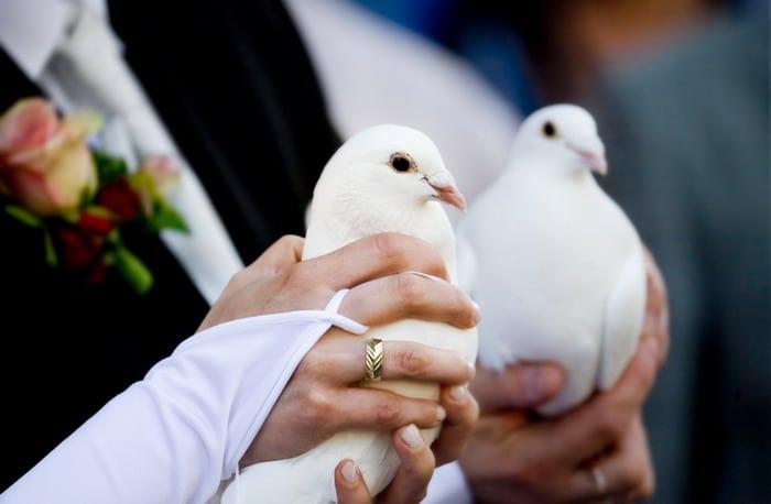 Hochzeit_TANYA_JAN_23052009