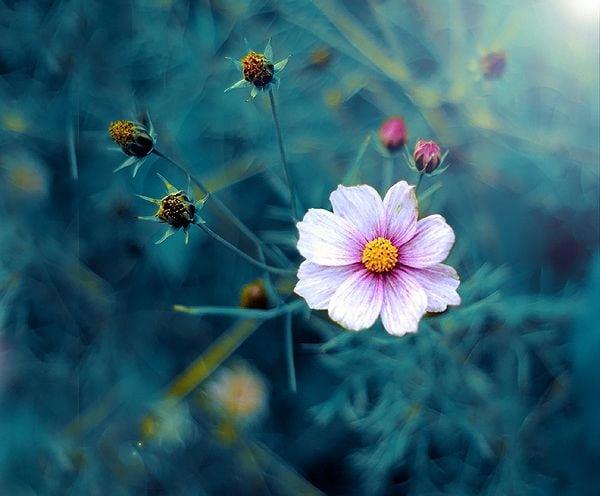 Cele mai frumoase Pilde – Cine-i drept înaintea Domnului?
