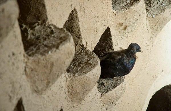 turnuri-porumbei-Iran-15