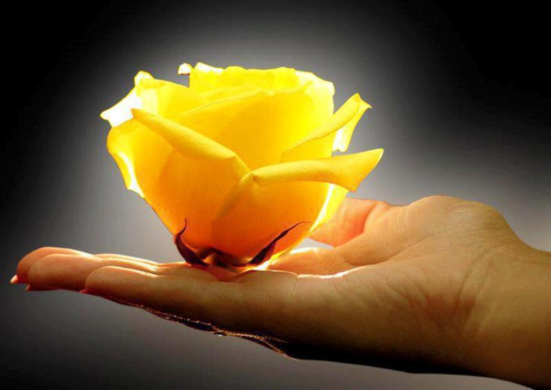 yellow rose gift