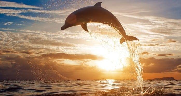 Delfin-saltando-en-el-mar-e1417520778551