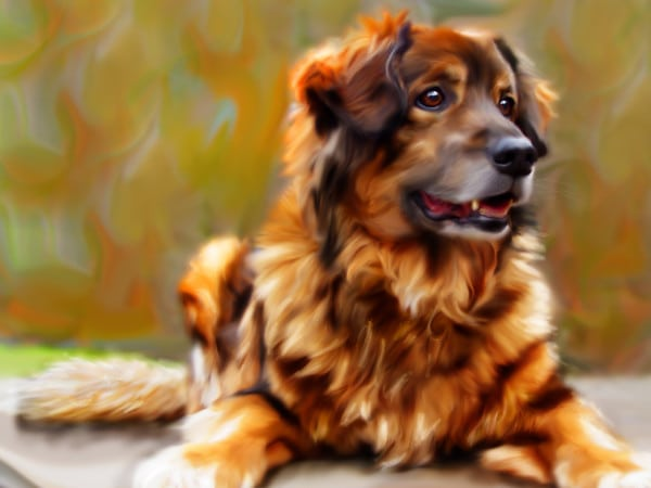 Dog Painting Dog Portrait Dog Art 3-M