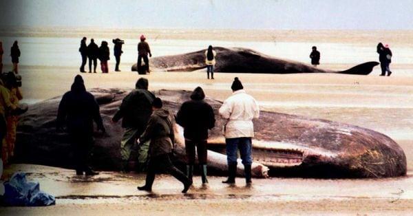 balene-sonar