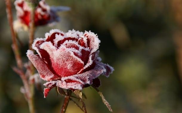 Când e iarnă în sufletul meu…