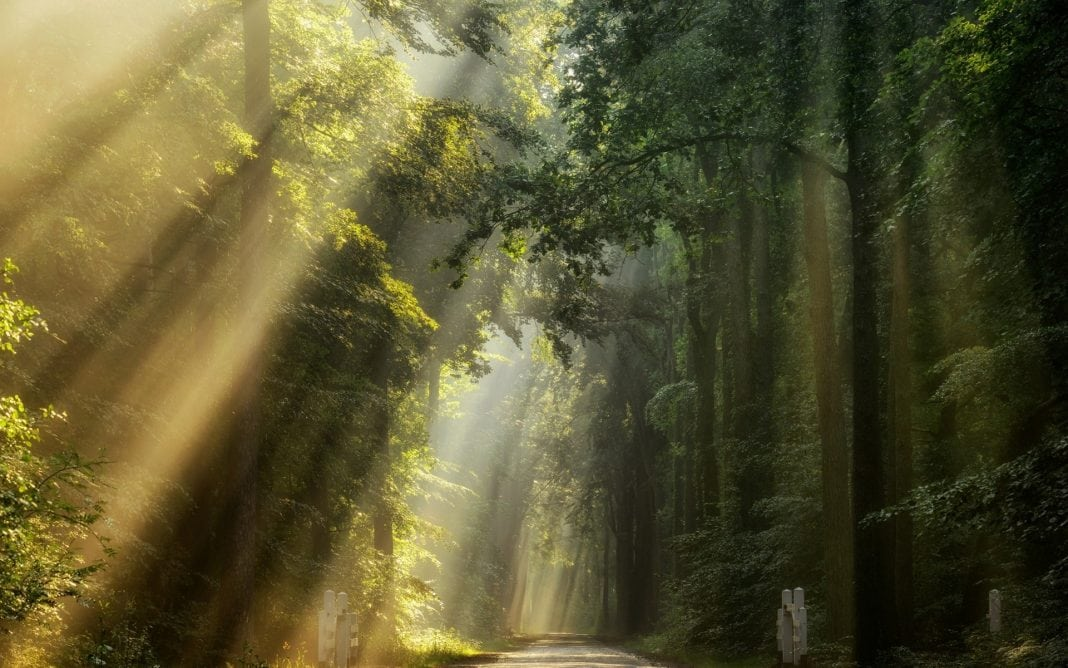 nature-landscape-road-sun-rays-trees-green-sunlight-1920x1200