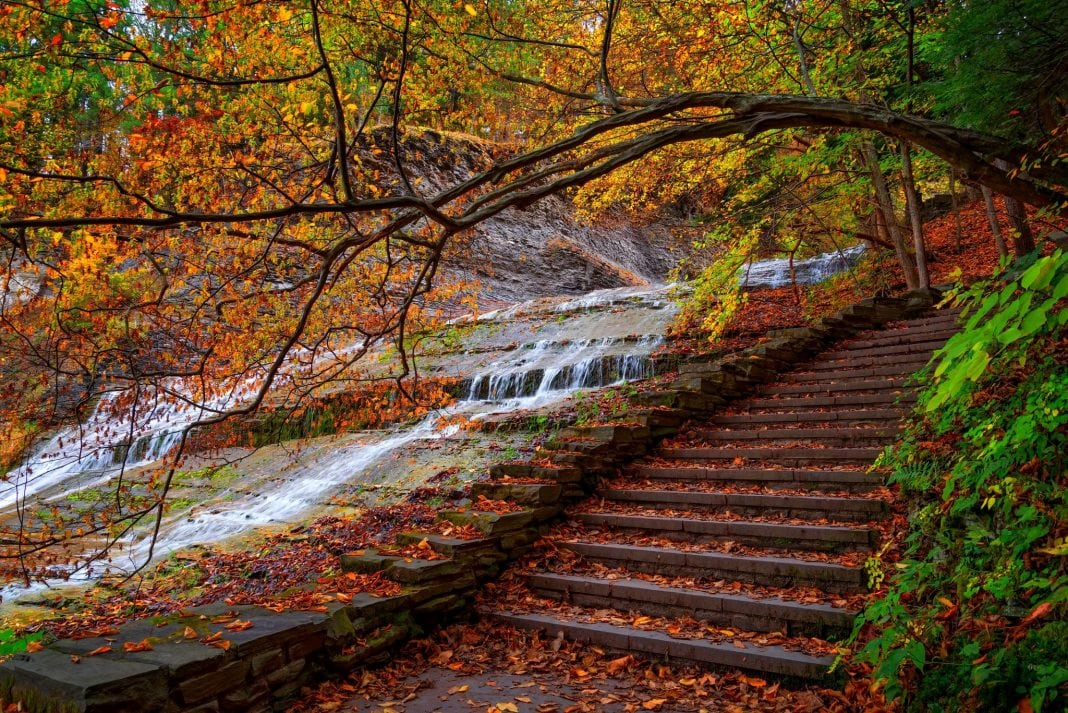 nature-water-forest-park