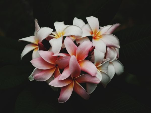 A photo by Charlie Harutaka. unsplash.com/photos/Gacd_XeSGQk