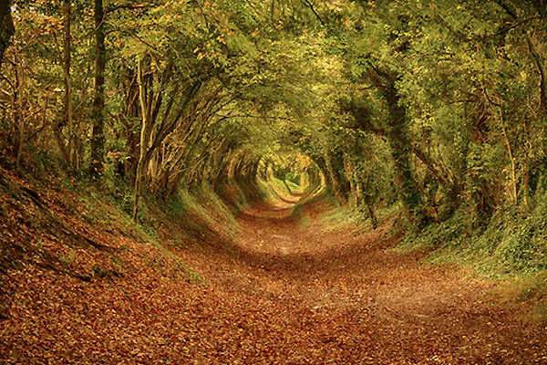 ecorazzi-com-tunnel_near_halnaker_west_sussex_lines_an_old_roman_road