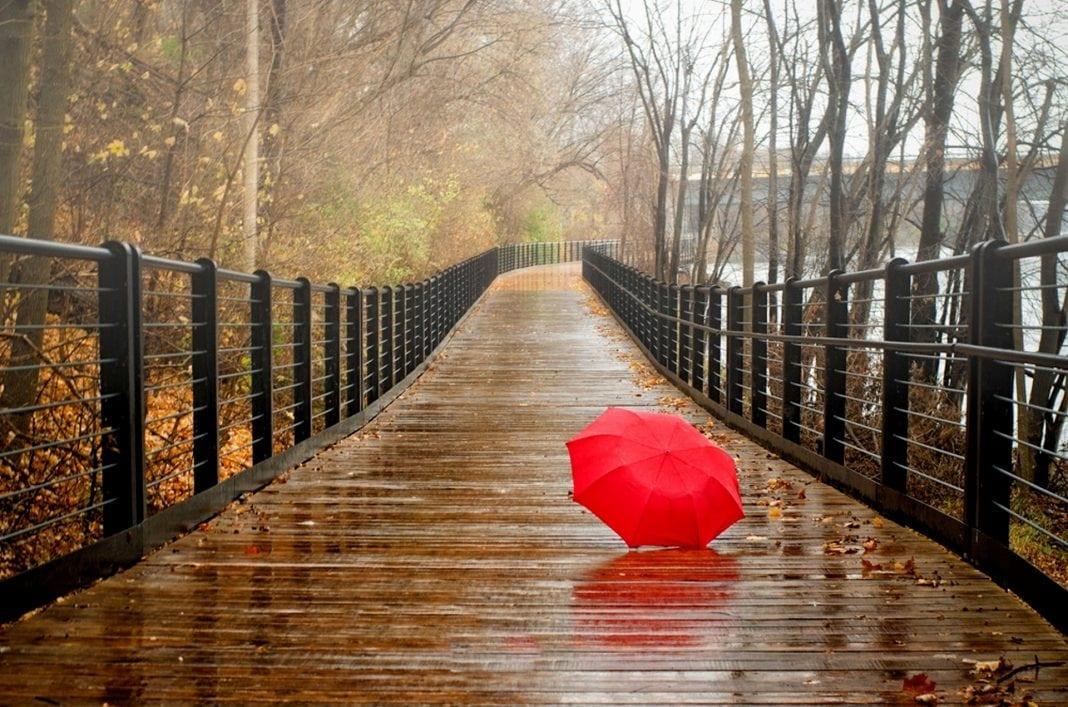 leaves-park-trees-forest-rain