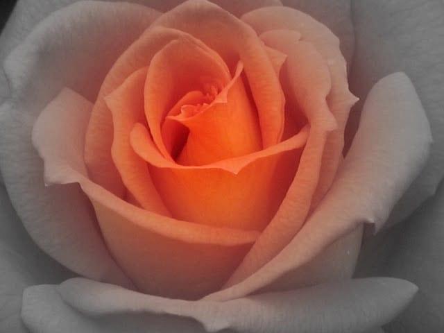 trand-roz