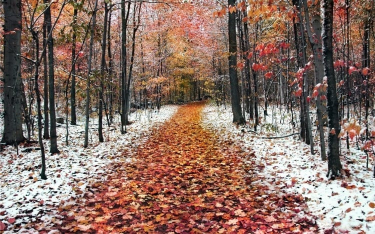 toamna-iarna