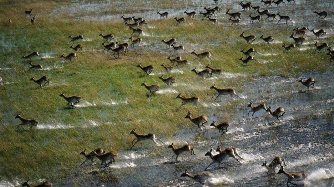 zebra-okavango-delta-botswana-landscape-nature-hd-city-229603-1