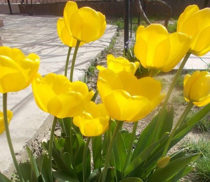 Grădina mea cu flori