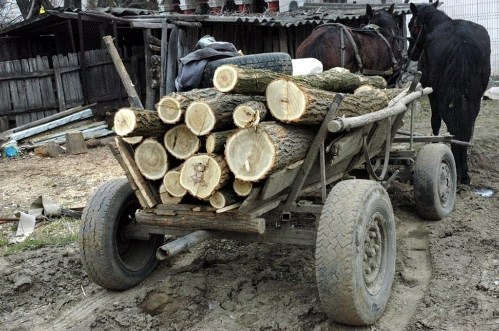 hoț de lemne