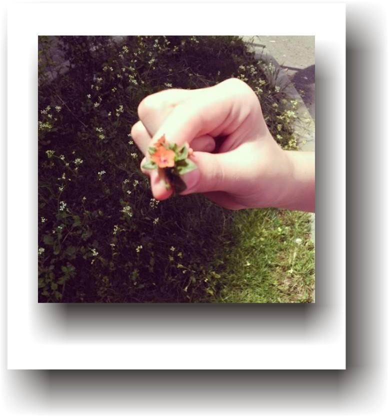 a dărui floare