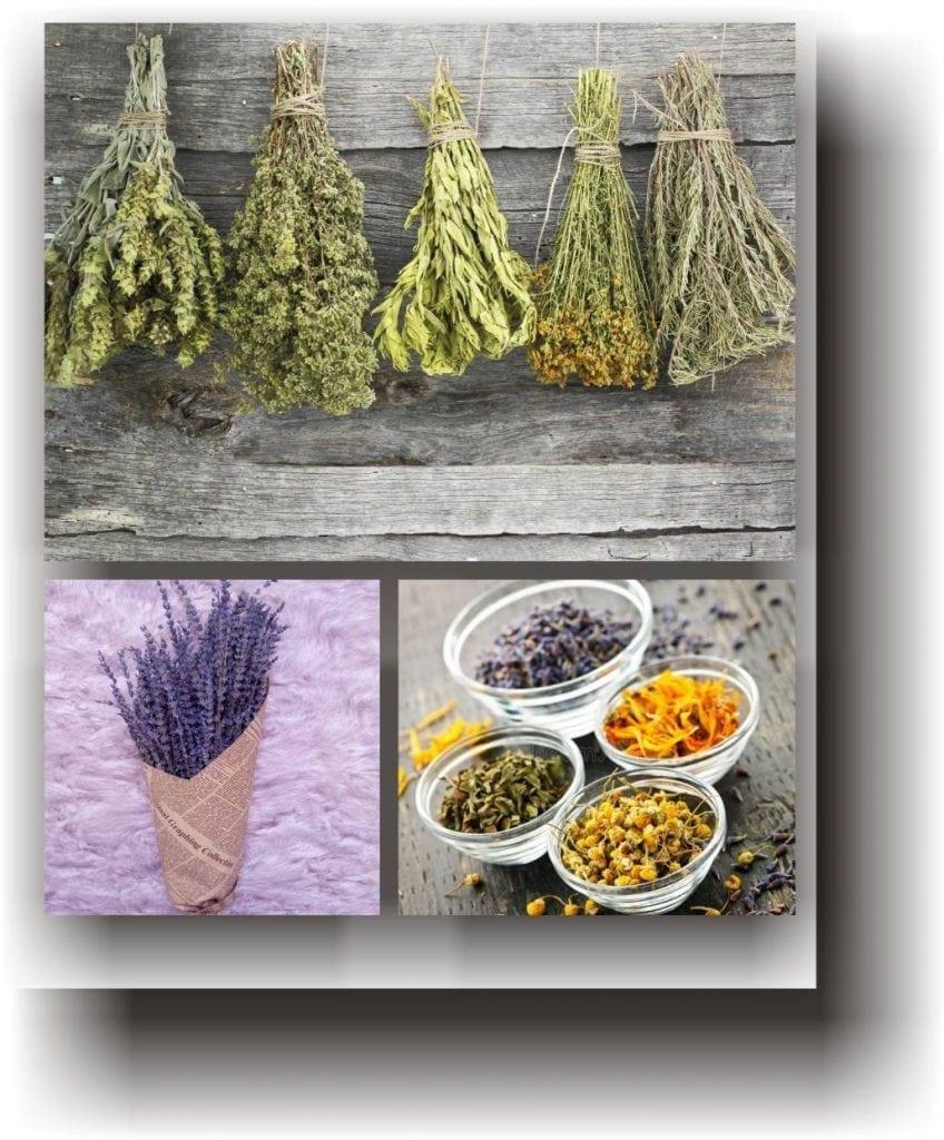 plantemedicinale