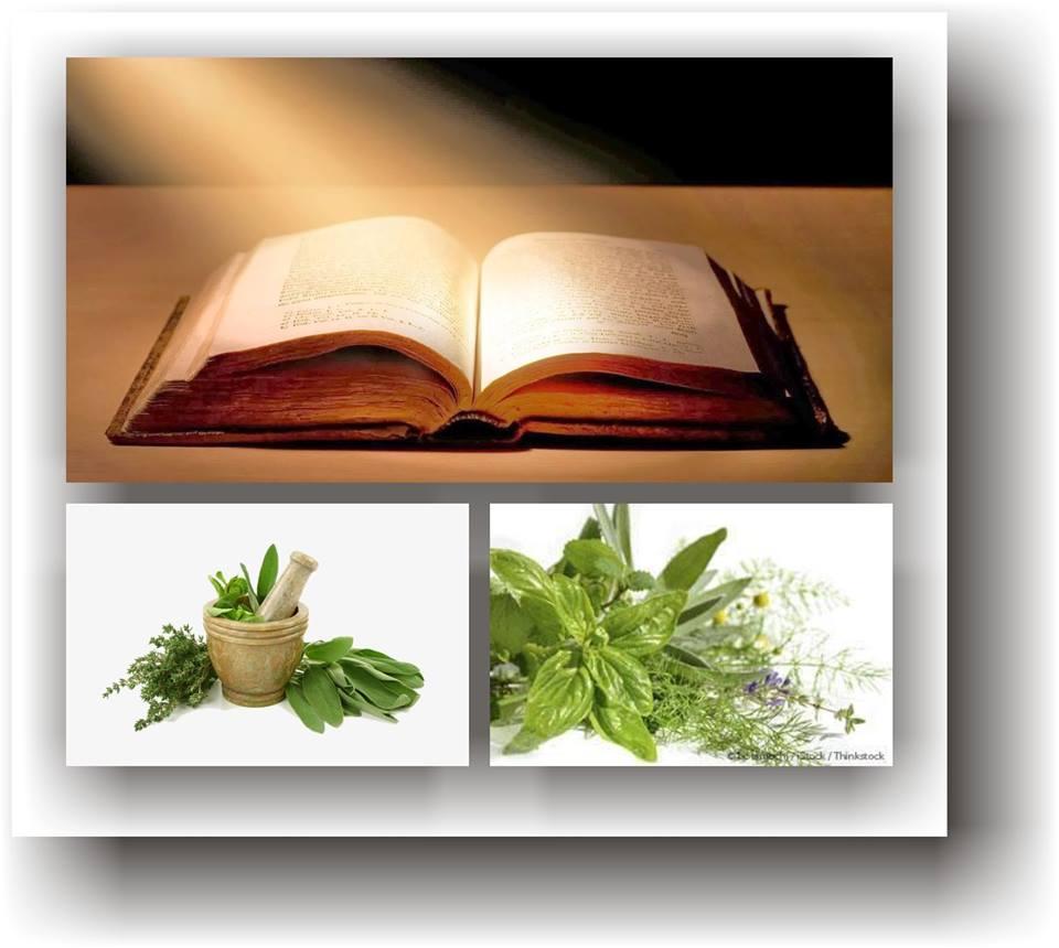 extrase biblice plante