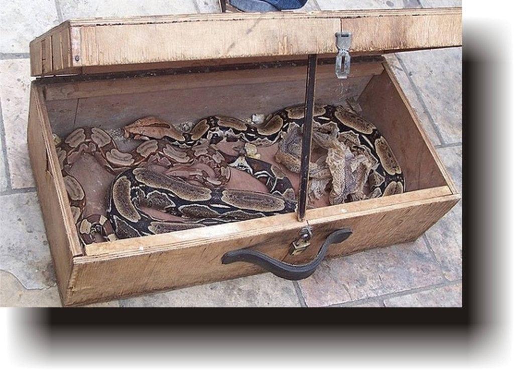 Legenda șarpelui