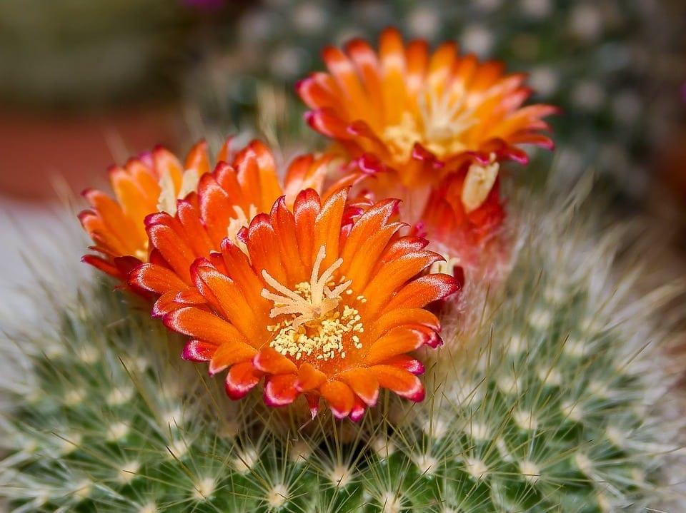 Este loc pentru o floare prin orice mulţime de ţepi