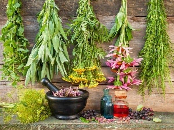 asocieri de plante