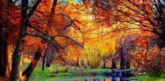 gardenpuzzle.pl- Viață